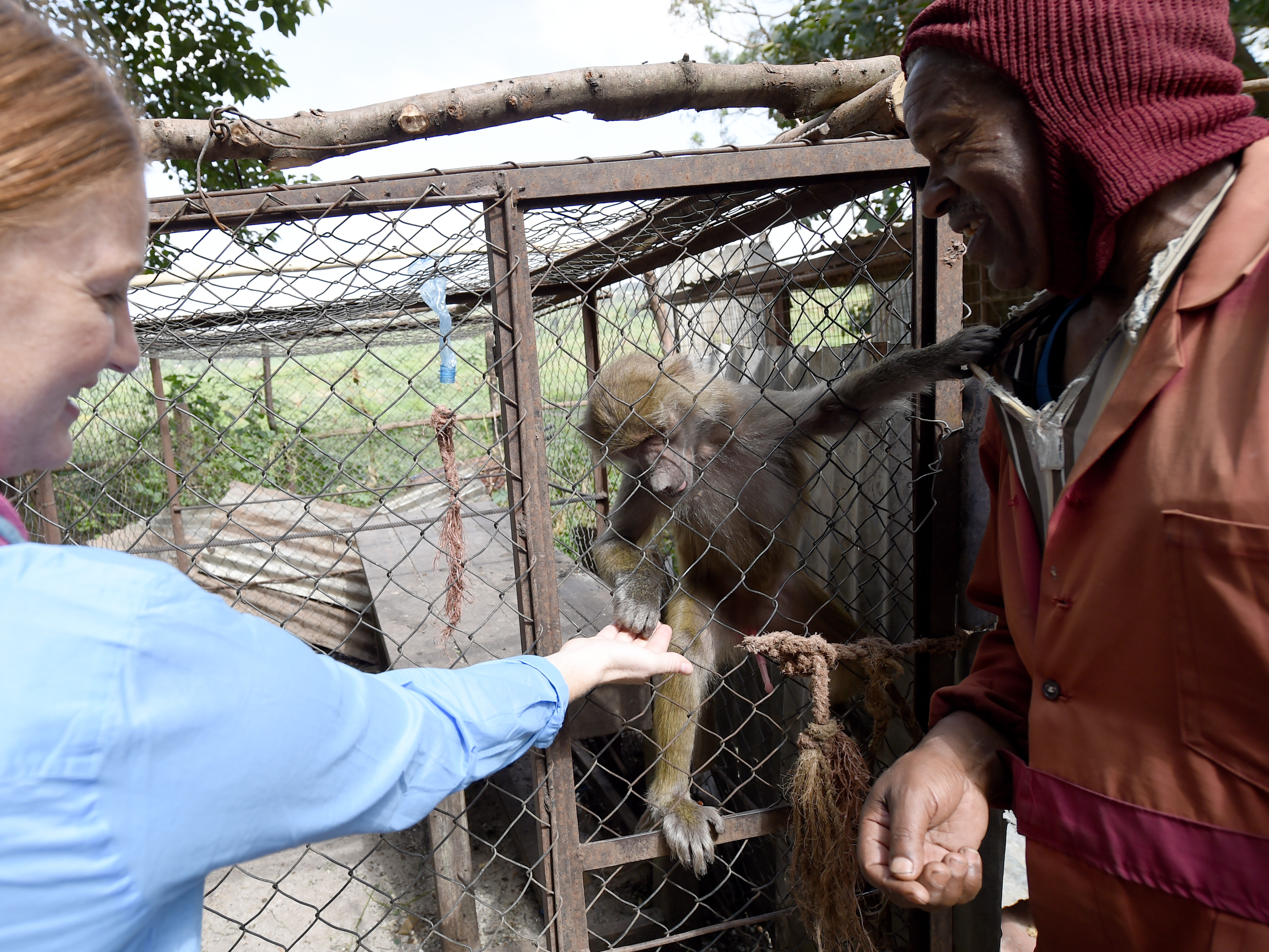 U.S. Army Capt. Jodi Collins, left, 404th Civil Affairs Battalion veterinarian, assigned to Combined Joint Task Force- Horn of Africa, feeds a monkey at the Haramaya University Zoo in Dire Dawa, Ethiopia, June 19, 2015. The team attended the Third International Veterinary Education Conference hosted by the HU College of Veterinary Medicine. (U.S. Air Force photo by. Senior Airman Nesha Humes)