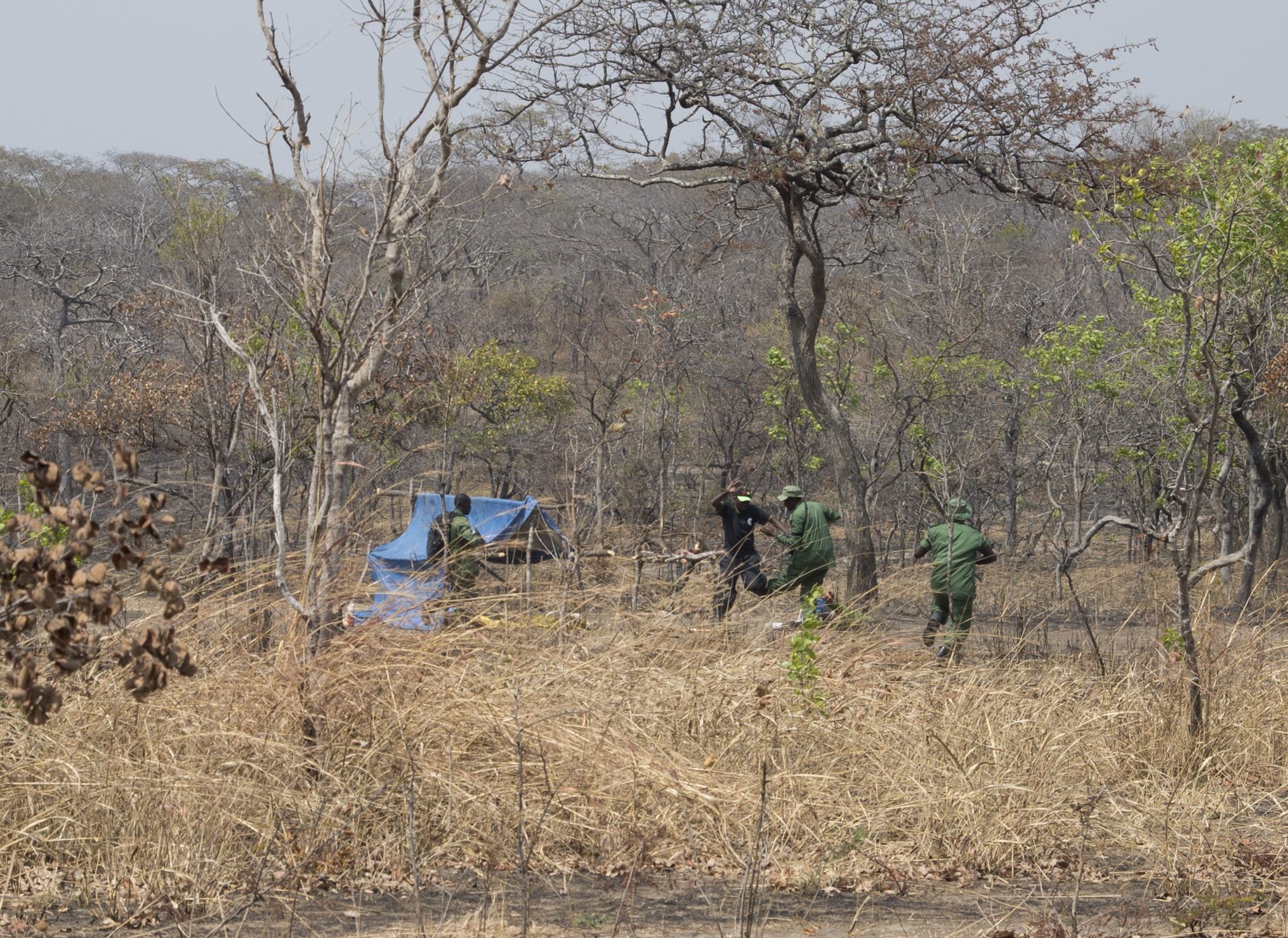 Tanzania rangers raid a mock poacher camp and apprehend the simulated illegal hunters during a demonstration August 24, 2016, at Rungwa Game Reserve, Tanzania. Rangers recently trained with members of the 403rd Civil Affairs Battalion, a component of Combined Joint Task Force - Horn of Africa, and North Carolina Army National Guard to learn techniques to track and capture poachers. (U.S. Air Force photos by Staff Sgt. Eric Summers Jr.)