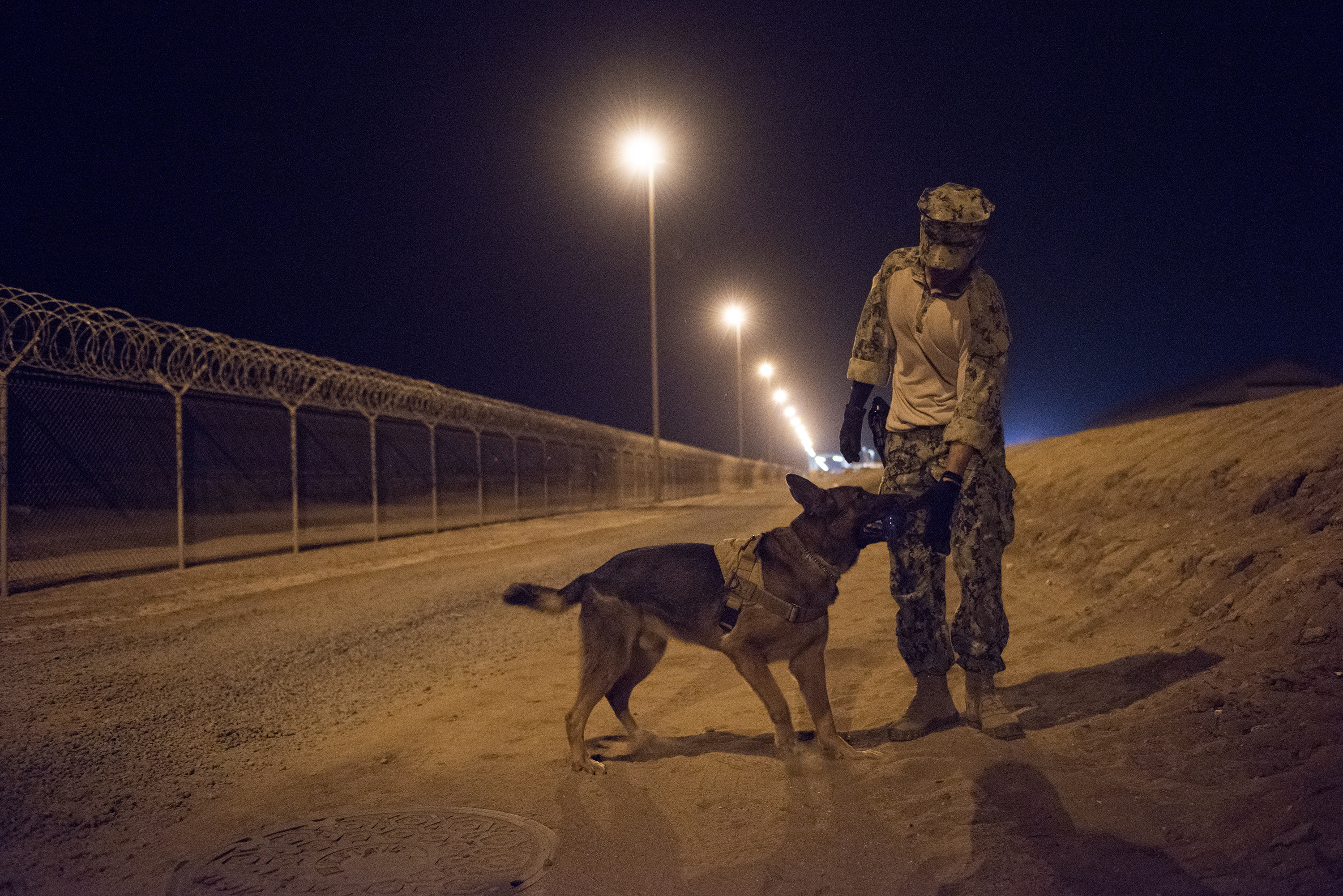 U.S. Navy Master-at-Arms 3rd Class Jordan Fuentes, a military working dog (MWD) handler rewards MWD Rex after conducting proficiency training on Camp Lemonnier, Djibouti, July 31, 2018. Military Working Dogs can be used to perform searches, subdue suspects, and detect explosives and narcotics. (U.S. Air National Guard photo by Master Sgt. Sarah Mattison)