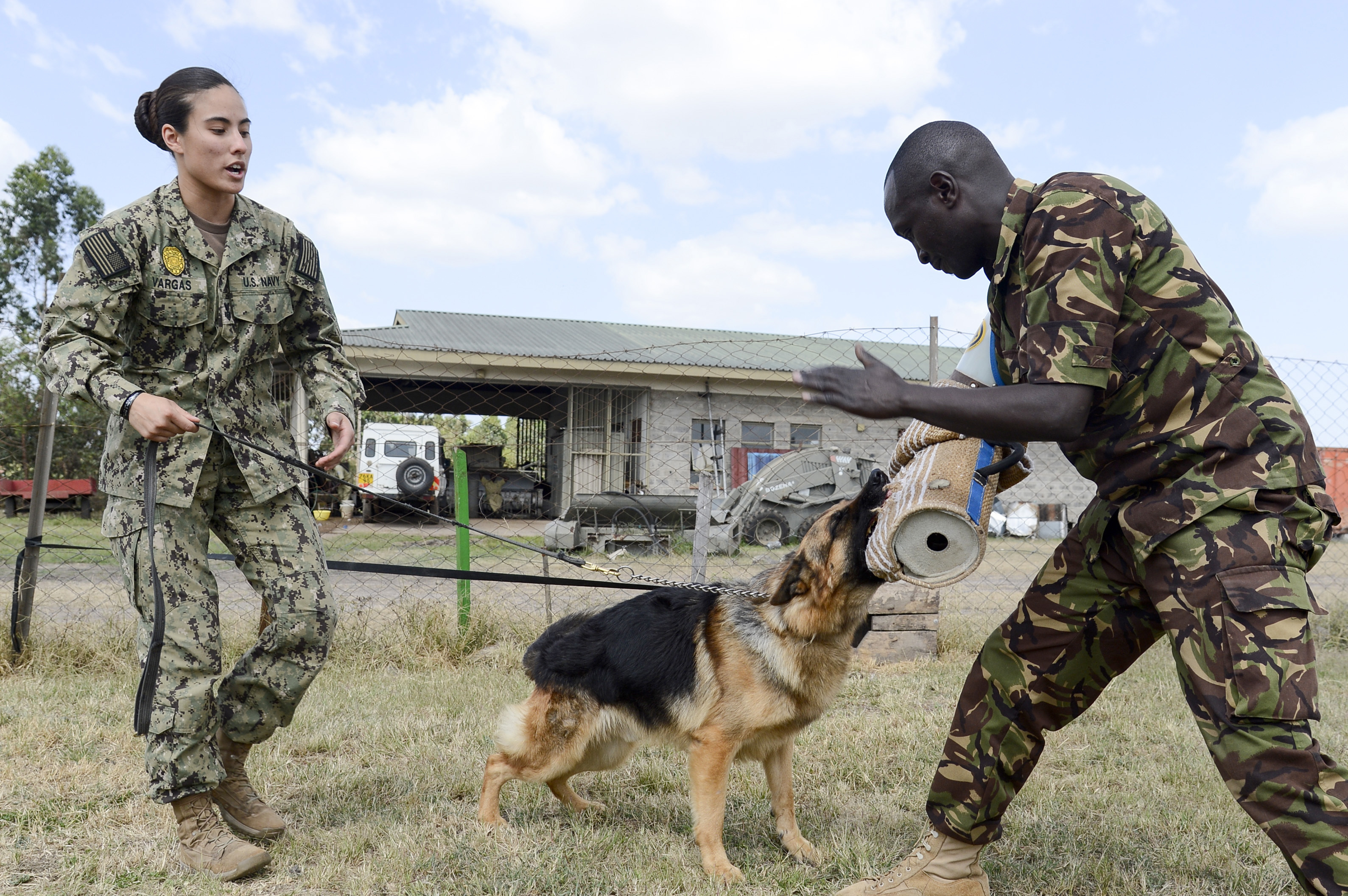 Master at Arms 1st Class Kristina Vargas, the Kennel Master assigned to Camp Lemonnier and Kenya Army Cpl. Junior Kimani, 1st Canine Regiment, Kenya Defense Force, conduct controlled aggression training during a Military Working Dog knowledge exchange, in Nairobi, Kenya, August 7, 2018. The exchange gave a chance for American and Kenyan forces to learn and work with each other to have a better understanding of each other's capabilities. (U.S. Navy Photo by Mass Communication Specialist 2nd Class Timothy M. Ahearn)