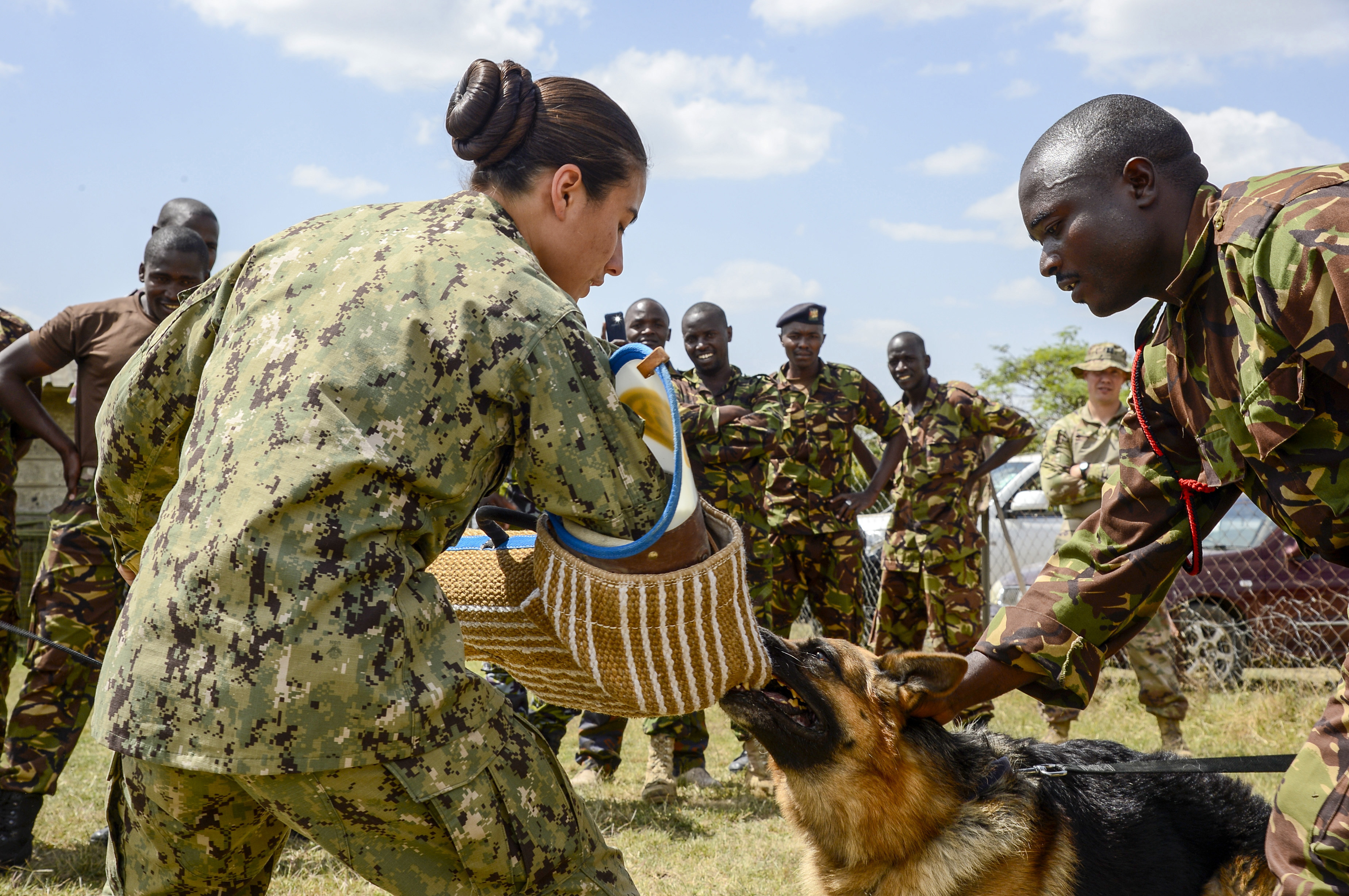 Master at Arms 1st Class Kristina Vargas, the Kennel Master assigned to Camp Lemonnier, and Kenya Defense Force (KDF) Cpl. Robert Magori conduct patrol work and demonstrate different techniques for members of the KDF's 1st Canine Regiment during a Military Working Dog knowledge exchange, in Nairobi, Kenya, August 7, 2018. The exchange gave a chance for American and Kenyan forces to learn and work with each other to have a better understanding of each other's capabilities.(U.S. Navy Photo by Mass Communication Specialist 2nd Class Timothy M. Ahearn)